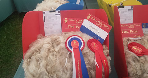 Our coloured fleece won 2nd place at the Royal Cornwall Show 2018